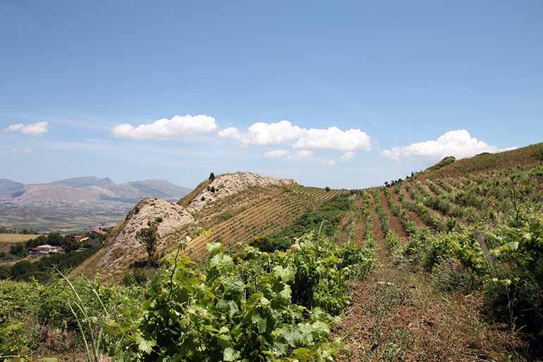 Travellers Insight Reiseblog Palermo Weingut