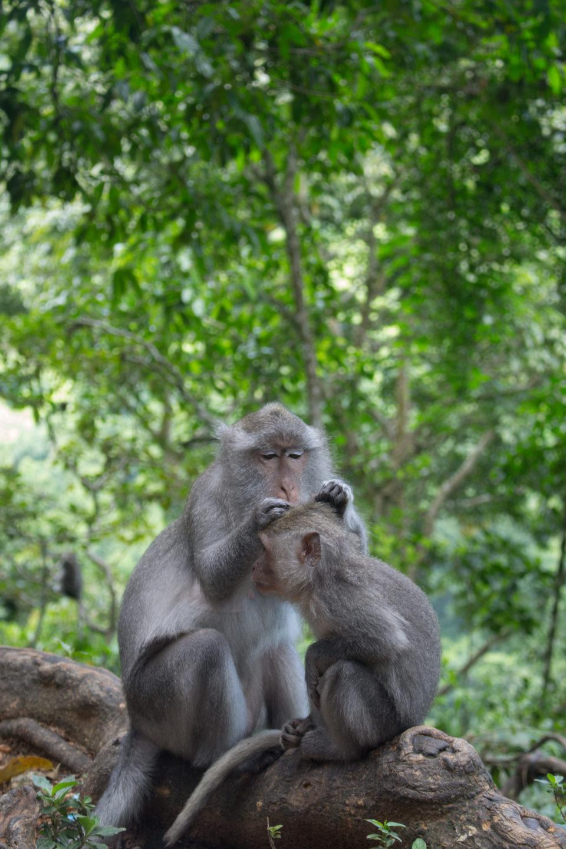 Travellers Insight Reiseblog Lombok Affen