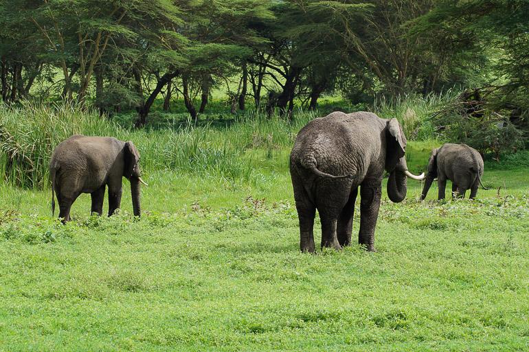 Tansania Safari Travellers Insight Reiseblog Elefantenfamilie