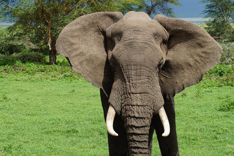Tansania Safari Travellers Insight Reiseblog