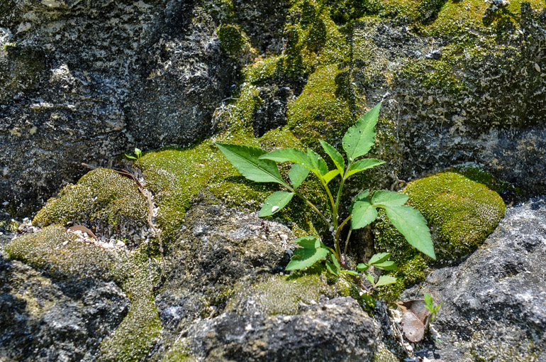 Guatemala-Tikal-Tempel-Dschungel