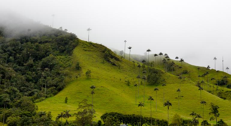 Travellers Insight Reiseblog Kolumbien Sehenswürdigkeiten Wachspalmen