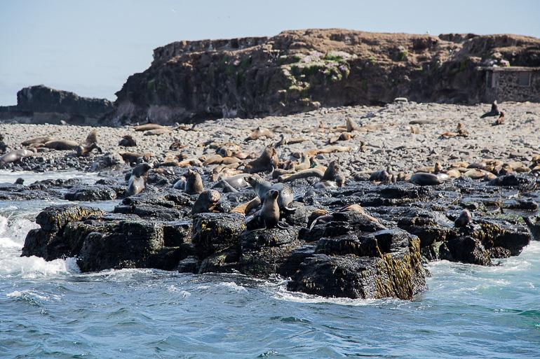 Travellers Insight Reiseblog Melbourne Phillip Island Robben