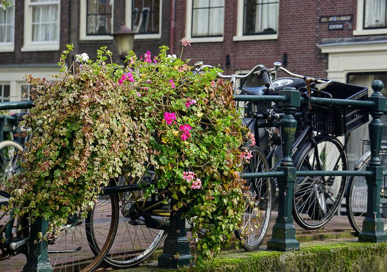 Travellers Insight Reiseblog Amsterdam Sehenswürdigkeiten Fietsen