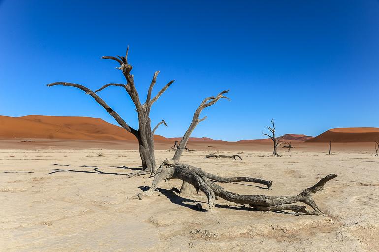 Travellers Insight Reiseblog Namibia Rundreise Dead Vlei Sossusvlei