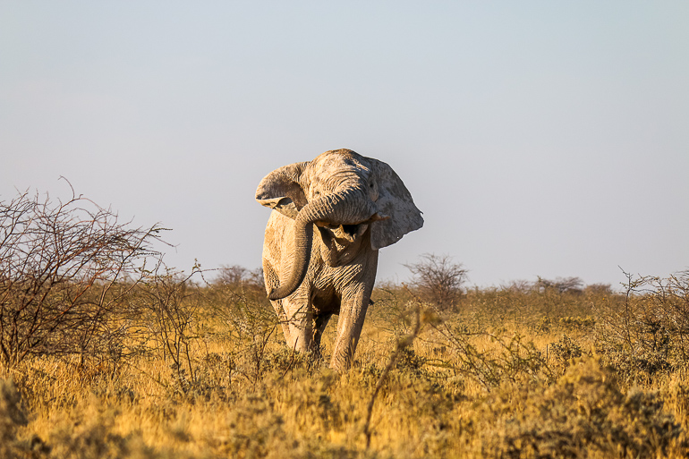 Travellers Insight Reiseblog Namibia Rundreise Etosha National Park Elefant