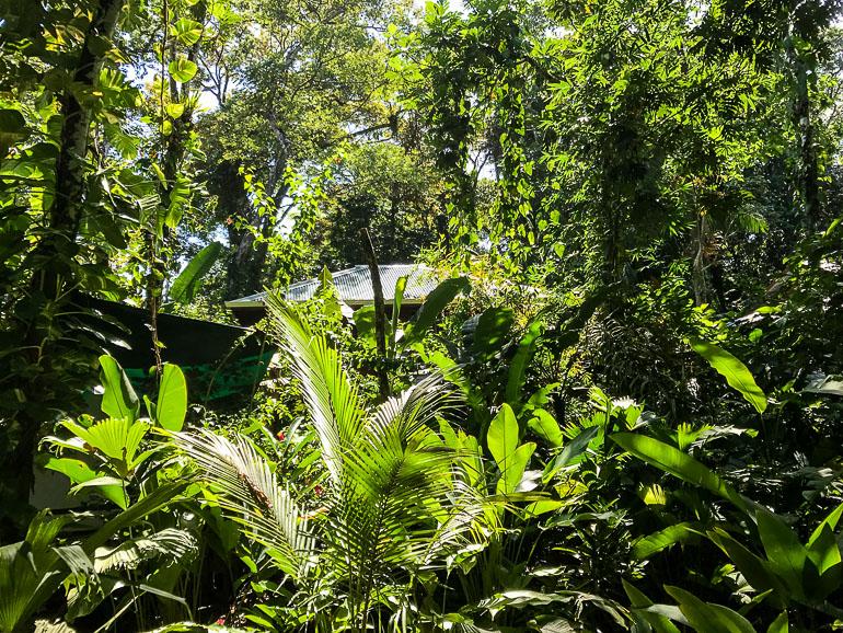 Travellers Insight Reiseblog Panama City Bastimentos Dschungel