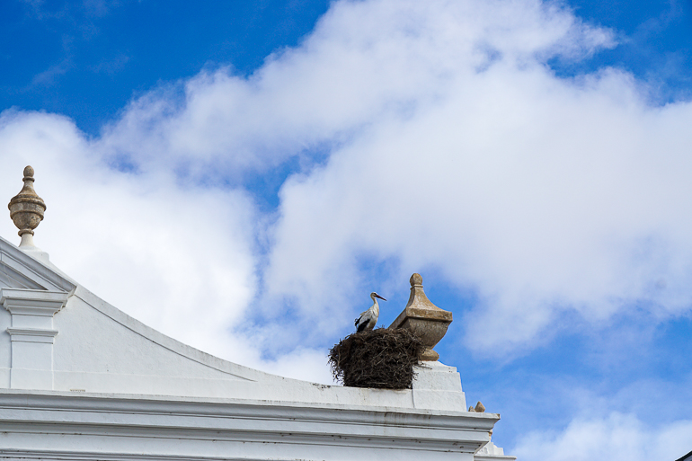 Travellers Insight Reiseblog Portugals Algarve Faro Storchennest
