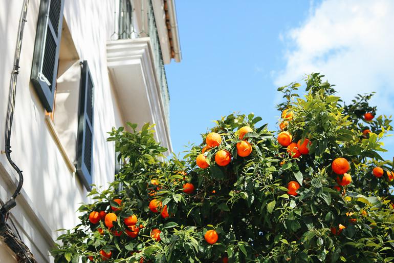 Travellers Insight Reiseblog Santa Catalina Palma Orangenbäume