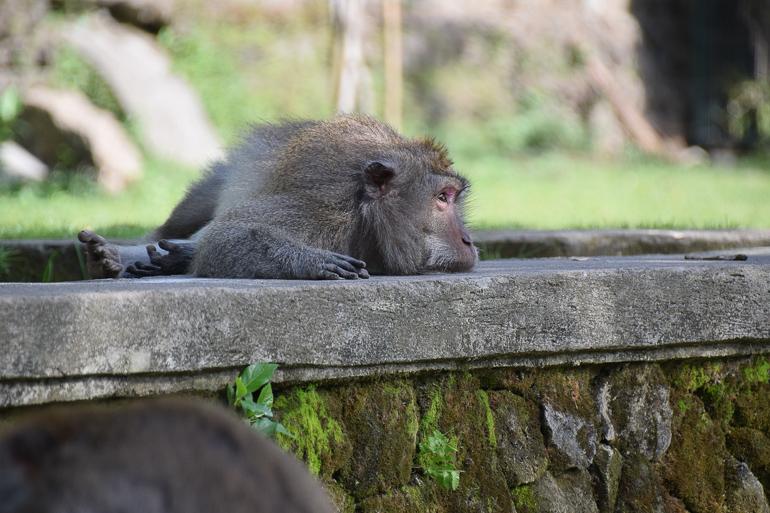 Travellers Insight Reiseblog nachhaltig reisen Affe
